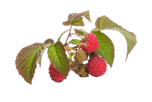 red fruit raspberry