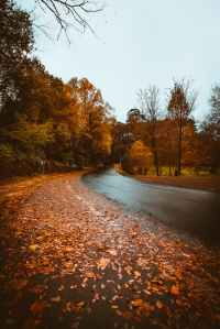 brown paved road under blue sky